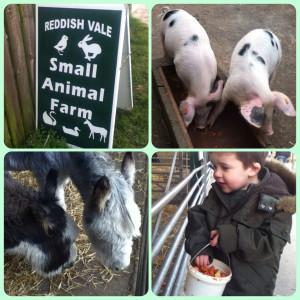 Reddish Vale Farm