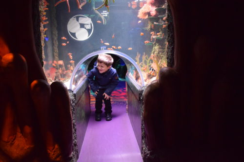 Review: Christmas at SEA LIFE Manchester