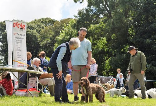 Taking part in the Dogs Show at the Woolsery Agricultural Show