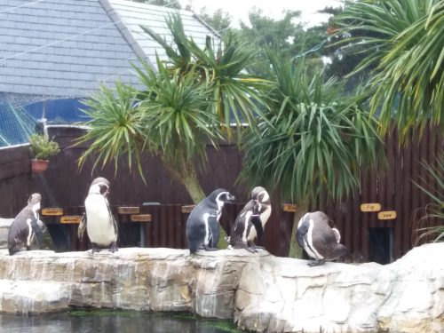 Days Out: Visiting Weymouth Sea Life Adventure Park
