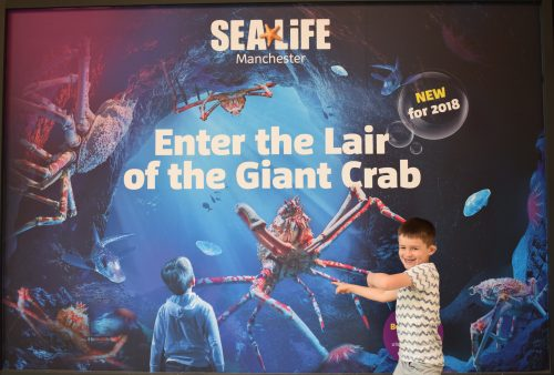 Meeting the Japanese Spider Crab at SEA LIFE Manchester