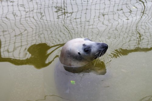 Days Out: The Cornish Seal Sanctuary in Gweek, Cornwall