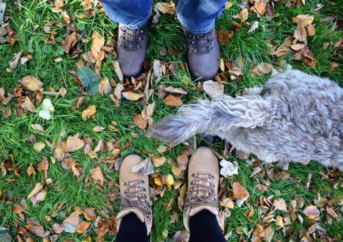 Dog walking essential wear for frosty days