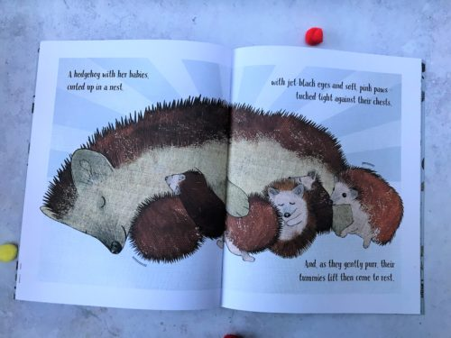 Book Review: Hedgehogs Don't Live in the City