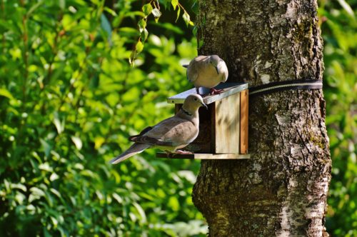 Common Birds To Spot In Your Garden This Summer