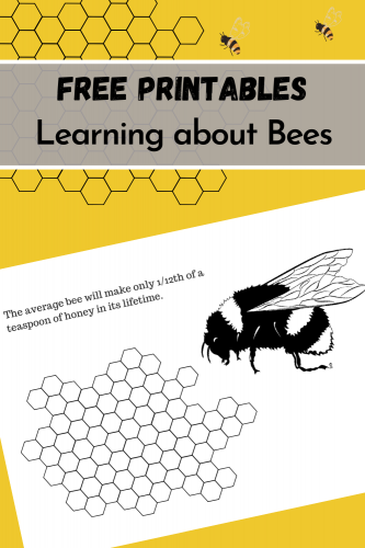 FREE Printables: Learning about Bees