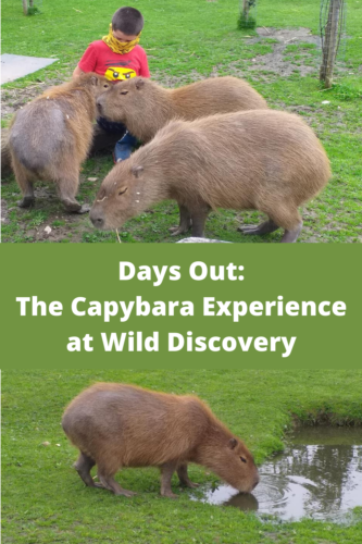 Days Out: The Capybara Experience at Wild Discovery